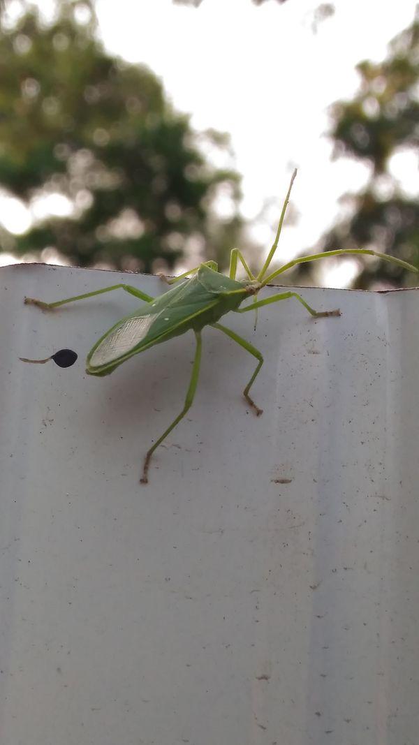 Bug thumbnail