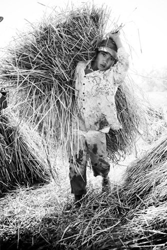 vietnamese boy in rice field thumbnail