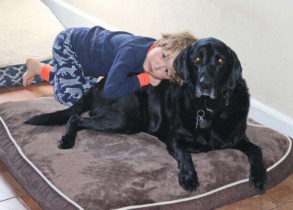 A Boy and His Dog thumbnail