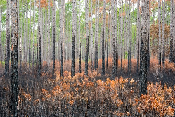 Forest Fire thumbnail