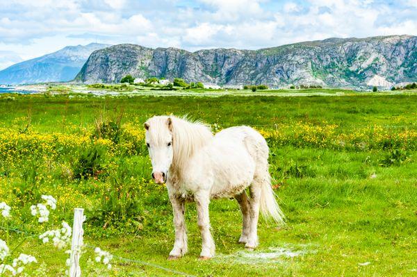 White Pony thumbnail