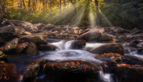 Water stream in the forest thumbnail