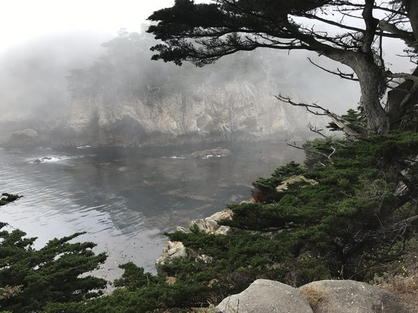 Fog at Point Lobos, CA thumbnail