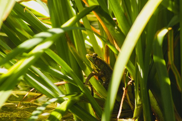 A Small Frog in its Own Little World thumbnail