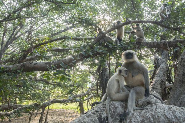 One Tree Jungle thumbnail