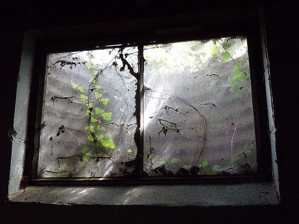 The Window thumbnail