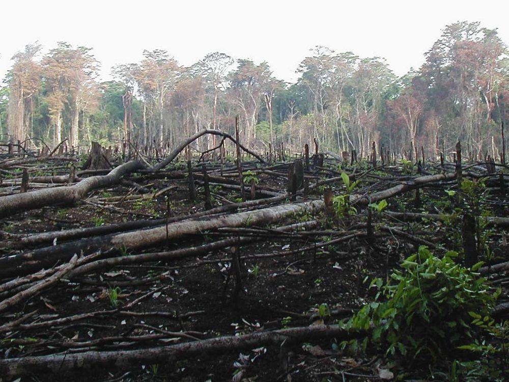 Guatemala Forest