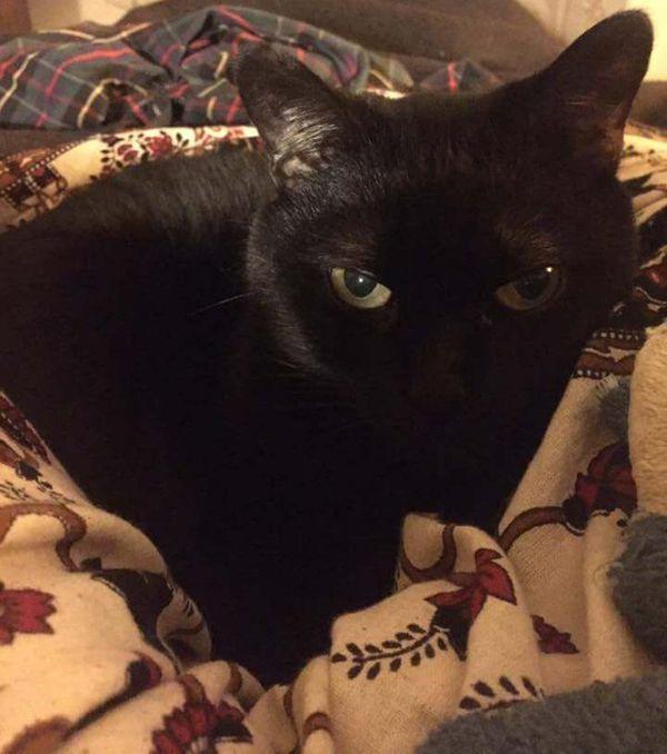 My Cat Vernie thumbnail
