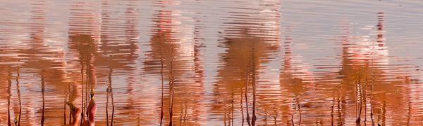 Flamingos in Laguna Colorada thumbnail