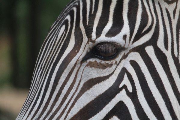Striped Friend thumbnail
