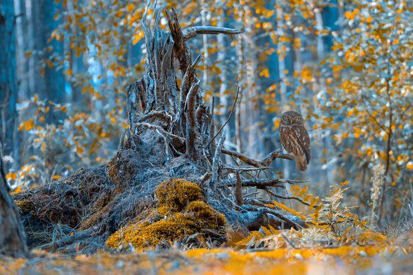 Fairy tale forest thumbnail