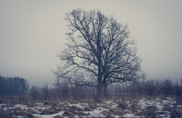 Lonely Tree thumbnail
