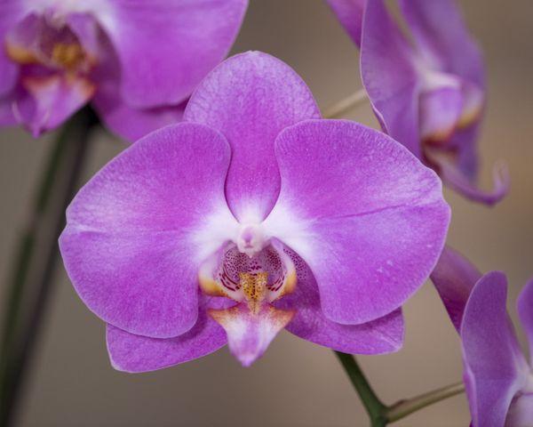 Purple Flower thumbnail
