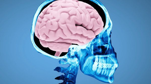 Preview thumbnail for Ask Smithsonian: What Happens When You Get a Concussion?