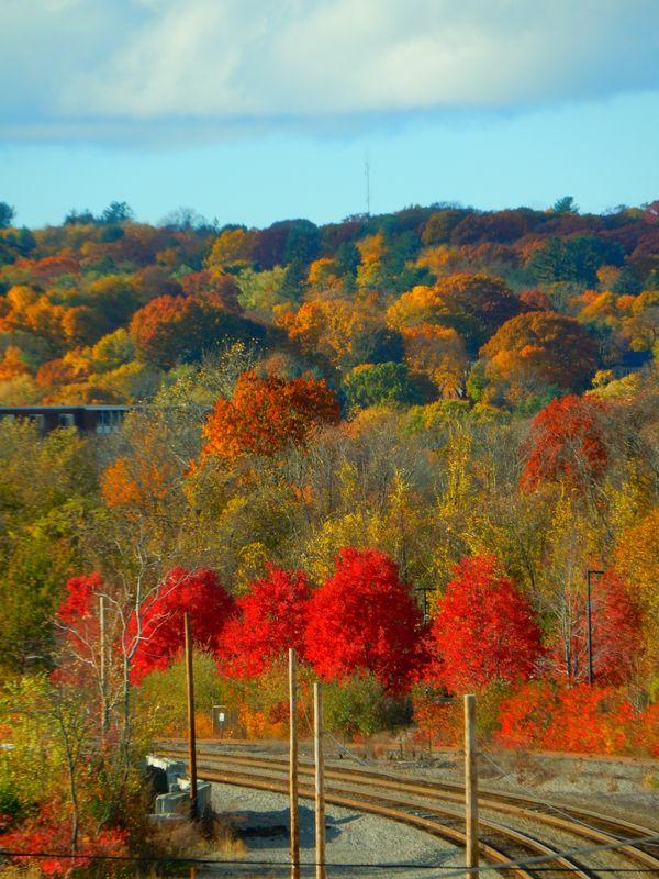 Fall colors in Cambridge, MA thumbnail