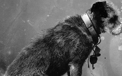 This Saturday, celebrate Owney the dog, the unofficial mascot for the U.S. Railway Mail Service.