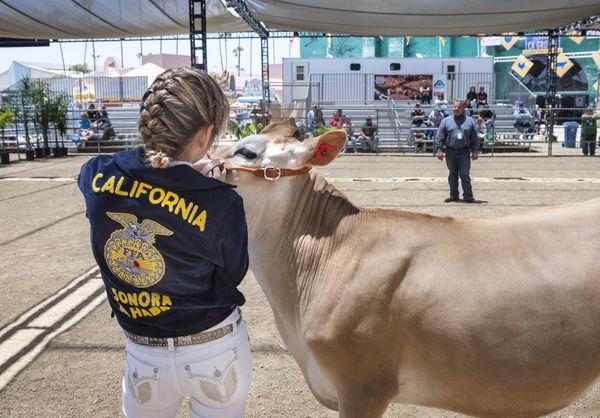 Cow Judging thumbnail