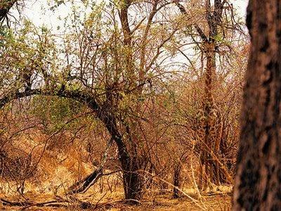 A giraffe in South Africa.