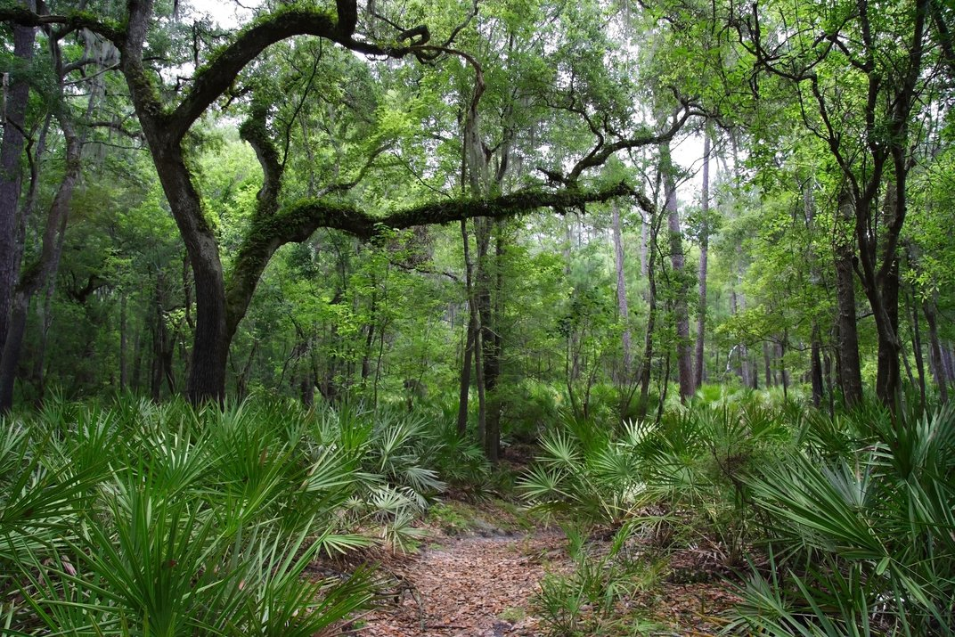 Why Florida's Lower Suwannee Is an Outdoor Lover's Paradise