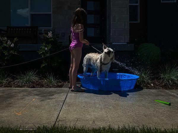 Dog wash thumbnail