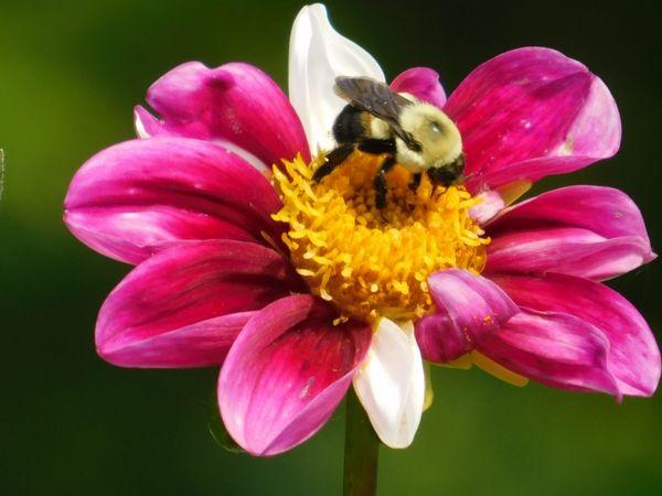The Bee thumbnail