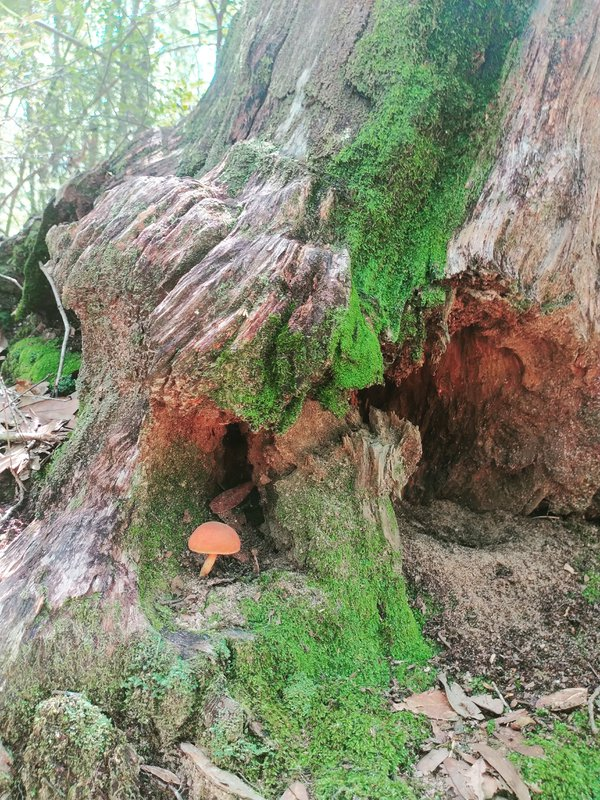 Fairy MnMs Moss and Mushroom thumbnail