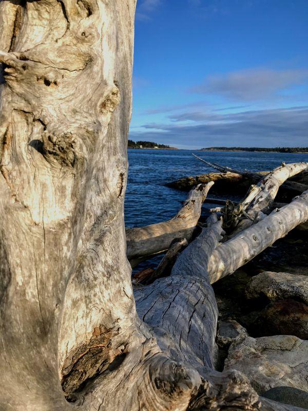 Wood and Water thumbnail