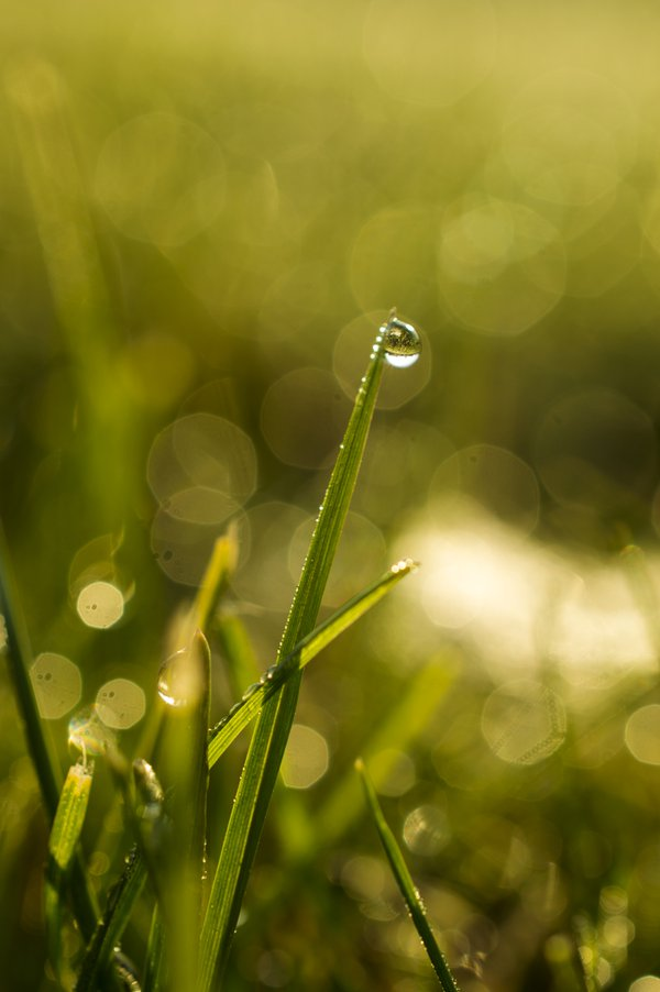 Morning dew thumbnail