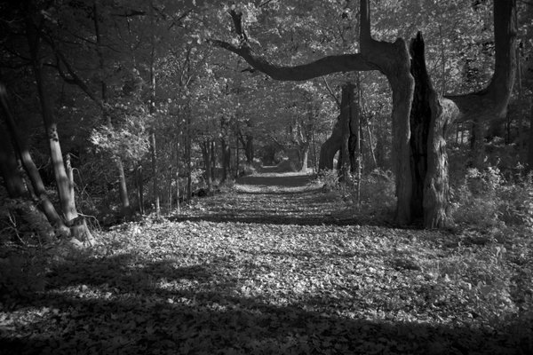 A Spooky Path in The Woods thumbnail