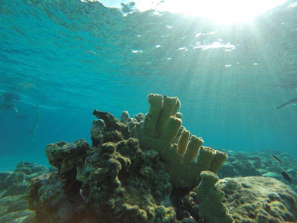 Pillar coral at Admiral's Aquarium. thumbnail
