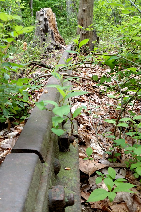 Overgrown railroad track thumbnail