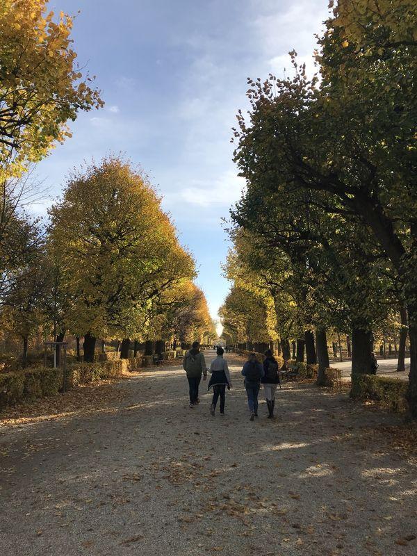 A Fall stroll in the park thumbnail