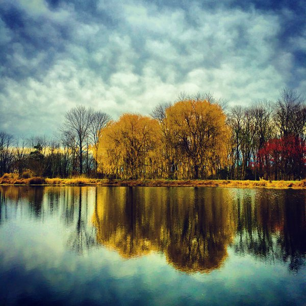 Reflections of Weeping Willows thumbnail