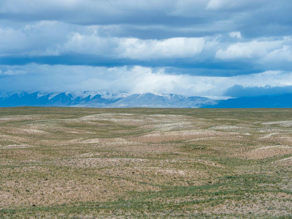 Field on the Tibetan Plateau