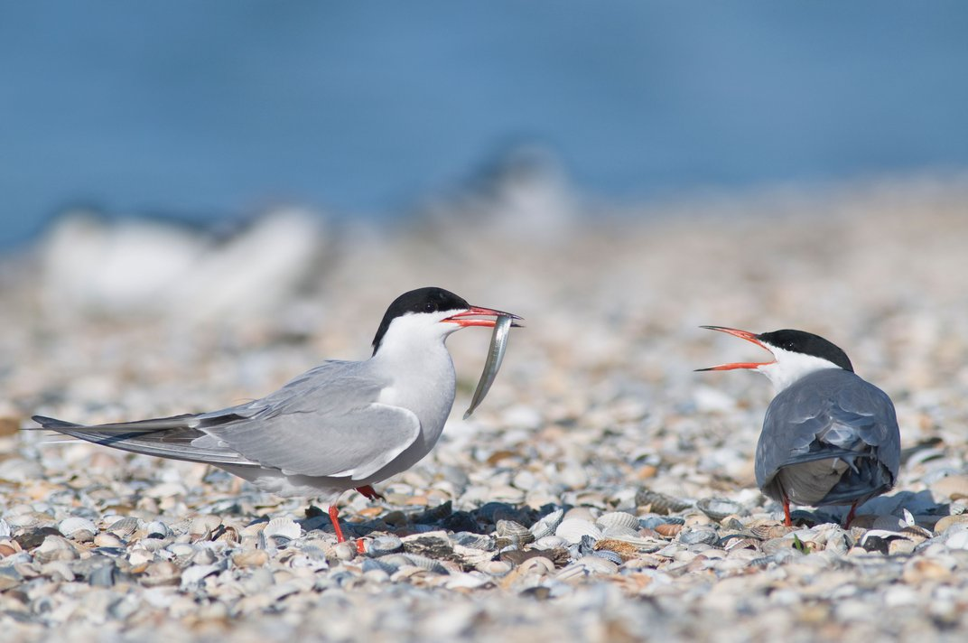 Birds Struggle to Keep Their Marriages in Rapidly Changing Urban Environments