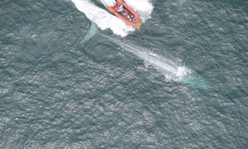 Blue Whale Tagging