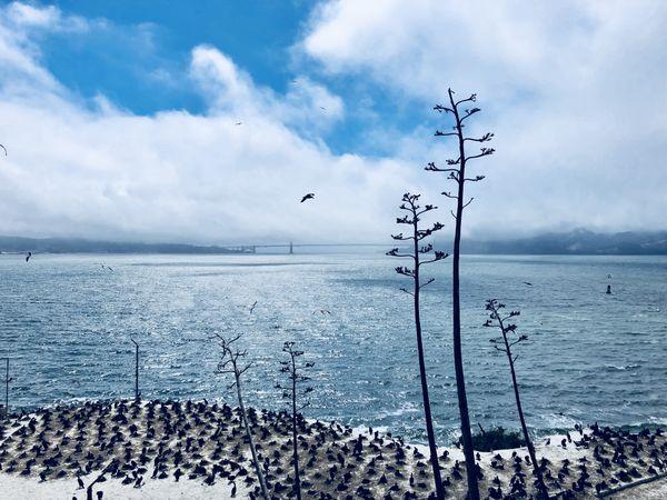 Golden Gate views from Alctraz thumbnail