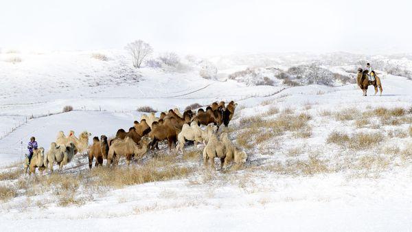 Winter Pasture thumbnail