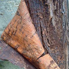 20110520090145mountain-ash-bark-by-sbpoet.jpg