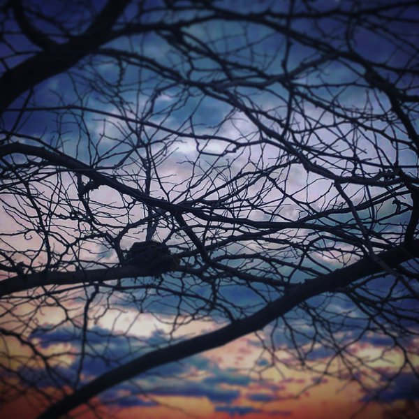 Empty nest thumbnail