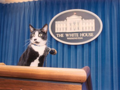 First Pet Socks poses in the White House Press Room in 1993.