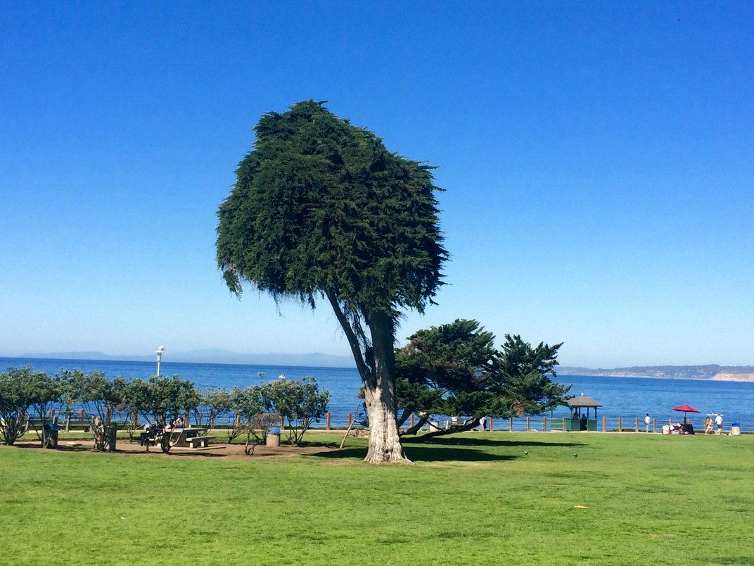Visit the Original Lorax Tree in Dr. Seuss's San Diego