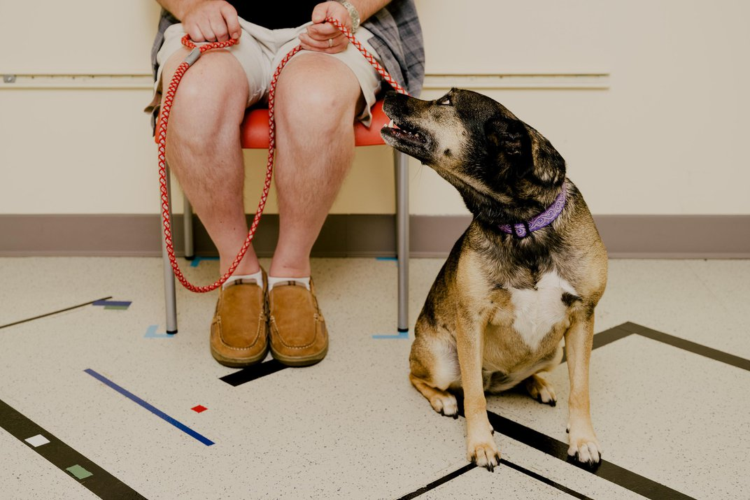 The New Science of Our Ancient Bond With Dogs