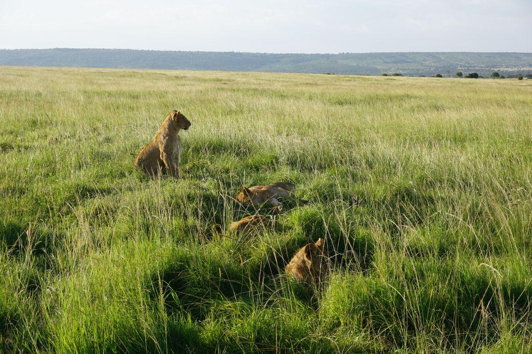 Meet One of the Few Female Safari Guides in Kenya