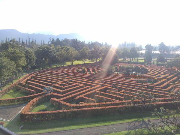 Plants maze in Taman Bunga Nusantara thumbnail
