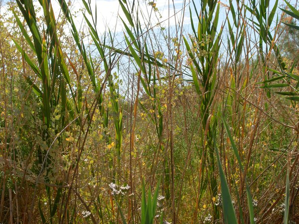 Peering through the grass in one of the few moist areas of the southwestern desert. thumbnail