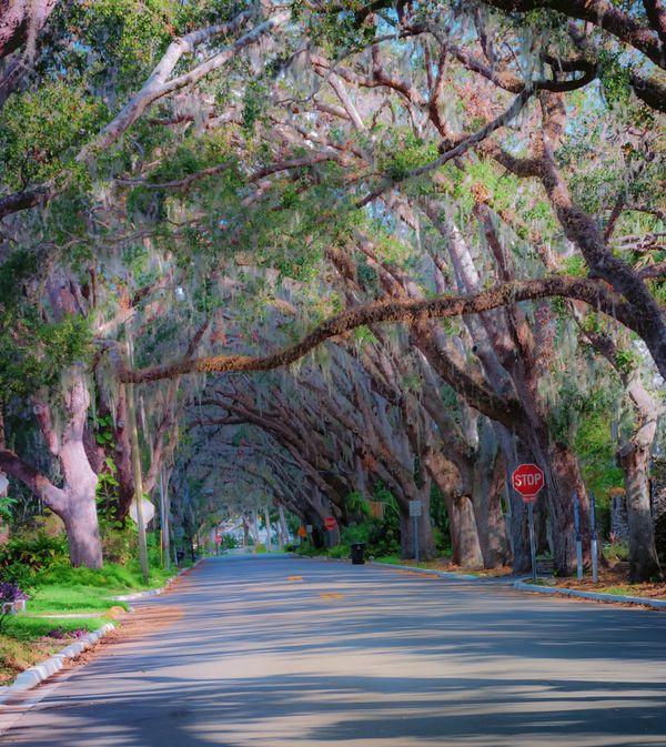 Canopy  thumbnail
