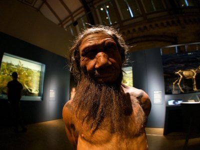Homo neanderthalensis, the earlier relatives of Homo sapiens, also evolved to shed most of their body hair.