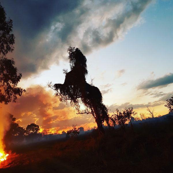 Wildfire Stallion  thumbnail