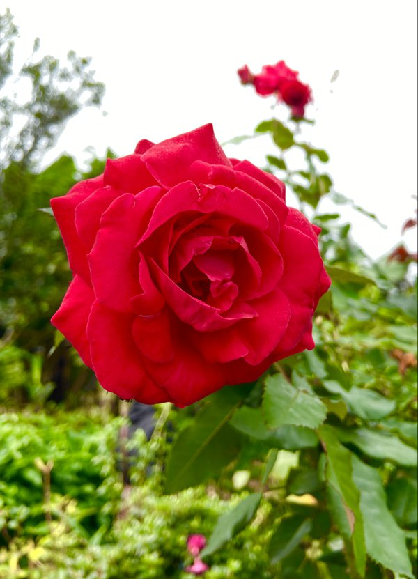 Take time to smell the roses thumbnail